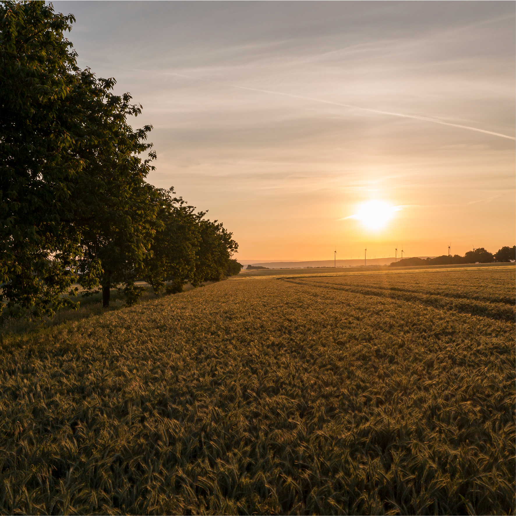 Feld im Sonnenaufgang über Meiste
